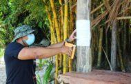 Prefeitura realiza fiscalização ambiental em ilhas da Costa Sul
