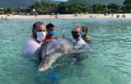 Instituto Argonauta atende ocorrência de um golfinho em Maresias