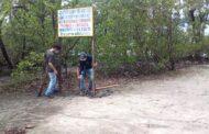 Mangue do Araçá na região central de São Sebastião é área de preservação permanente