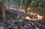 Estudo avalia os impactos de secas e incêndios na floresta amazônica