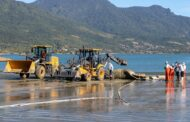 Baleia-de-bryde é encontrada morta no canal de São Sebastião