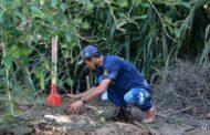 Plantio de mudas nativas por profissionais da SEMAM marca Dia Mundial de Proteção aos Manguezais
