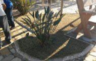 Prefeitura de São Sebastião executa serviços de manutenção e jardinagem no bairro São Francisco